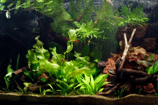 How To Set Up A Planted Tropical Community Aquarium Practical Fishkeeping