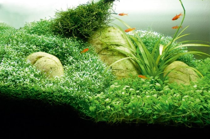 How to aquascape small tanks - Practical Fishkeeping