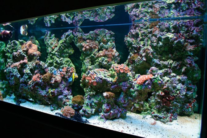 How To Make Your Own Live Rock Practical Fishkeeping