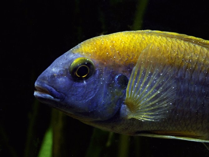 How to solve a problem like whitespot - Practical Fishkeeping