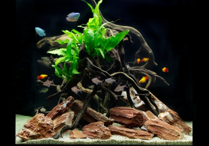 How To Set Up A Low Maintenance Cube Shaped Aquarium Practical Fishkeeping