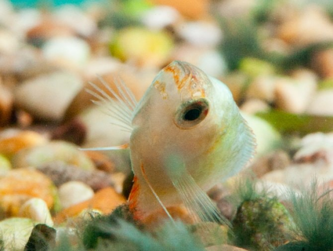 What You Need To Know About Returning A Fish Practical Fishkeeping