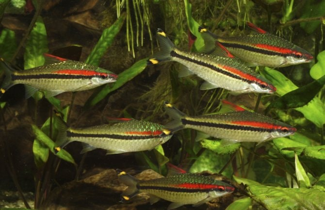 New legislation affects which fish you may keep in England