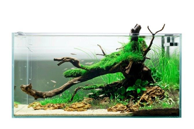 Inspirational Aquariums Darren Dalton S Temperate Aquascape Practical Fishkeeping