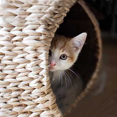 Read This Before Deciding On An Indoor Cat Your Cat