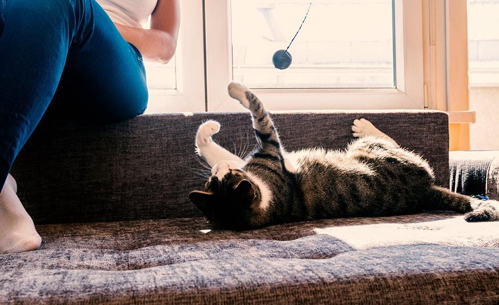 How Do I Entertain My Indoor Cat Your Cat