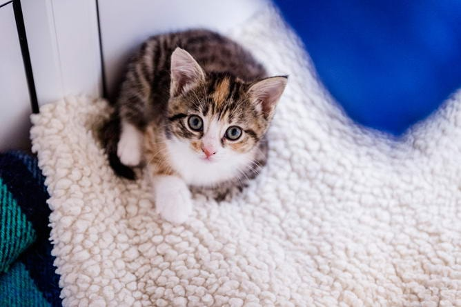 Cats With Special Needs Uk