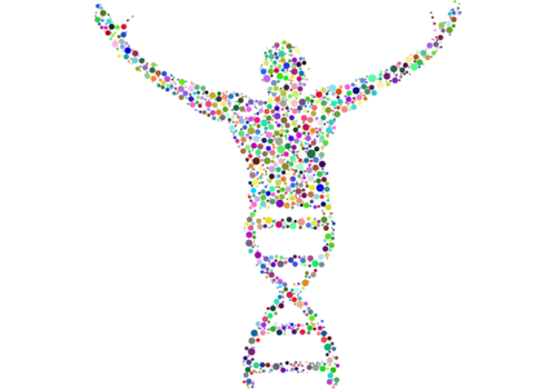 dna-2789567_1280-75661.png