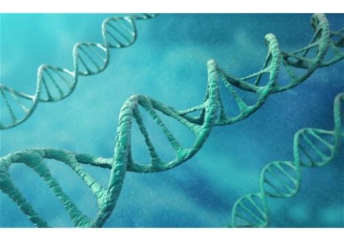 dna-ancestry_2502064b-24330.jpg