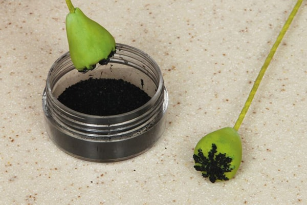 Sugarpaste poppies step 6