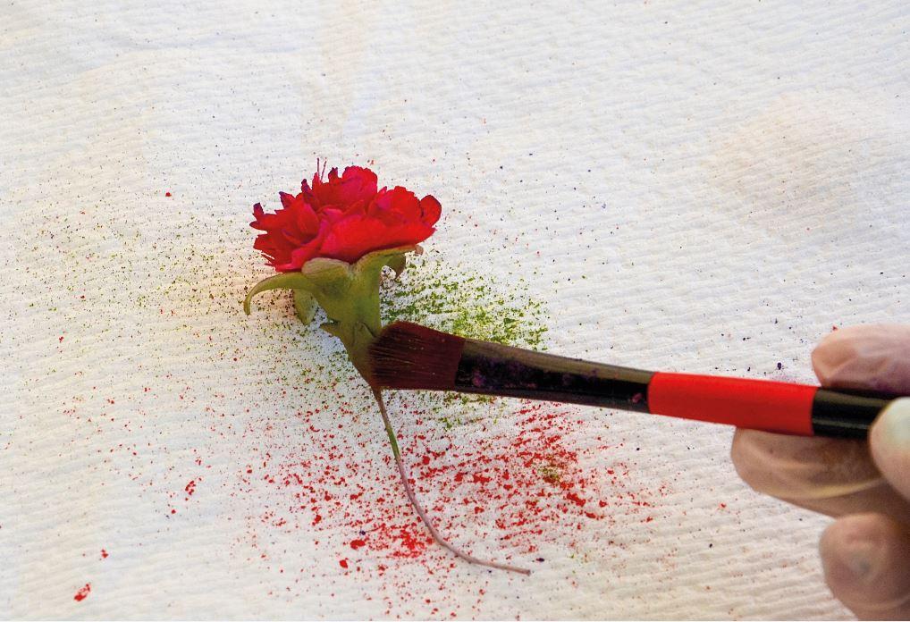 Sugarpaste Carnations step 15