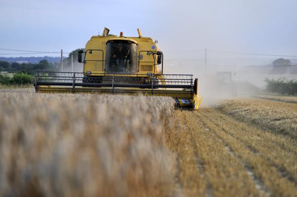 Harvesting on Marriage family farm