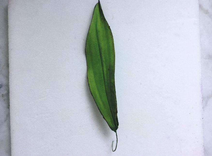 Sugarpaste Lily step 9