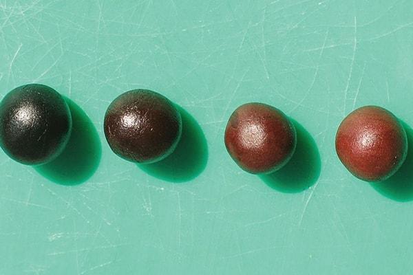 Modelling Blackberries step 1