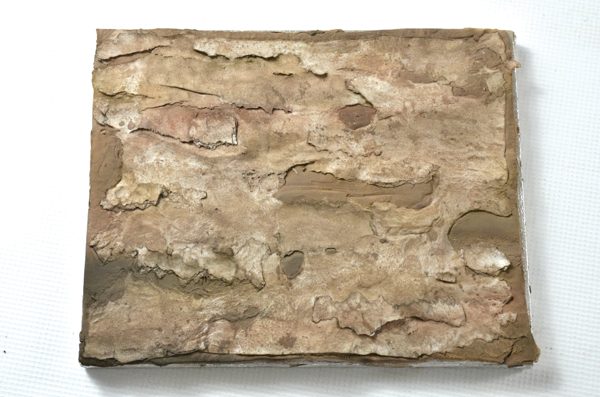 bark wood cake texture
