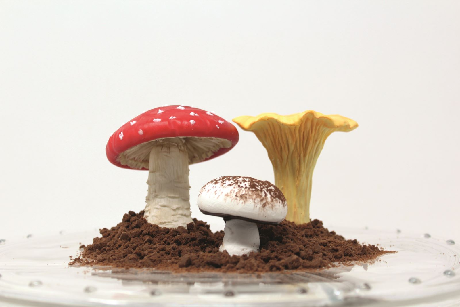 HOW TO DISPLAY THE MUSHROOMS