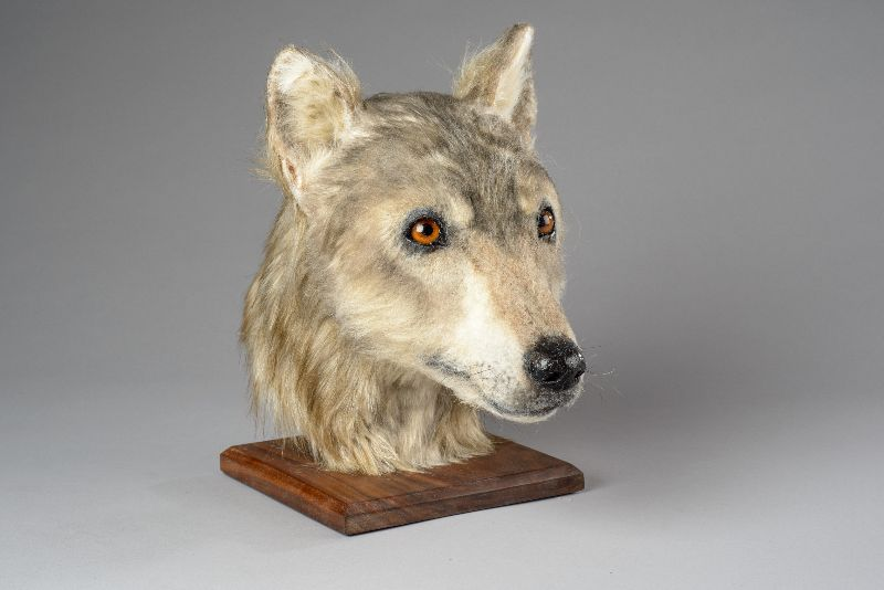 Face of a Neolithic dog