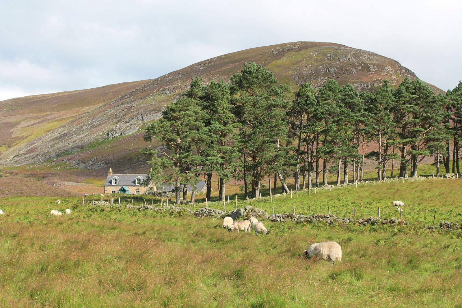 imports_CESC_angus-path-to-mount-keen_22370.jpg