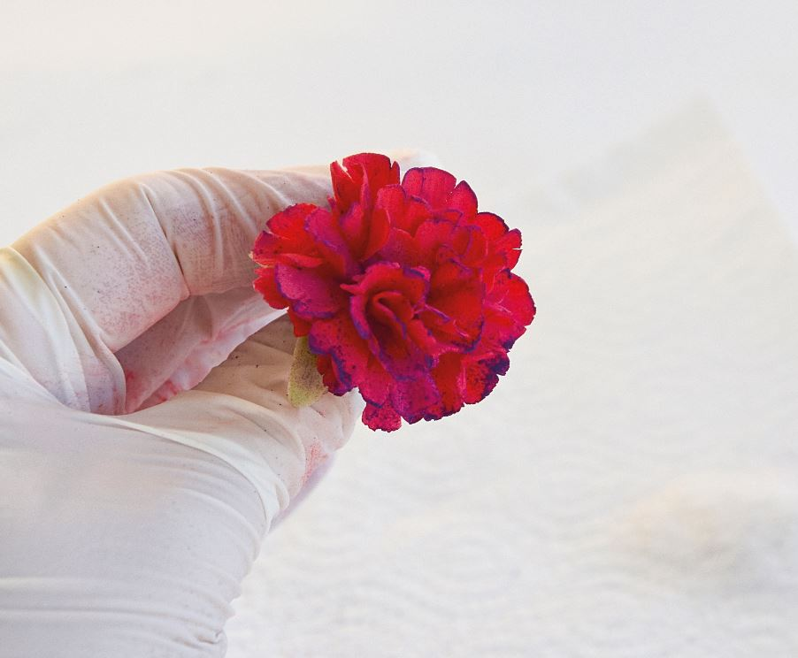 Sugarpaste Carnations step 14