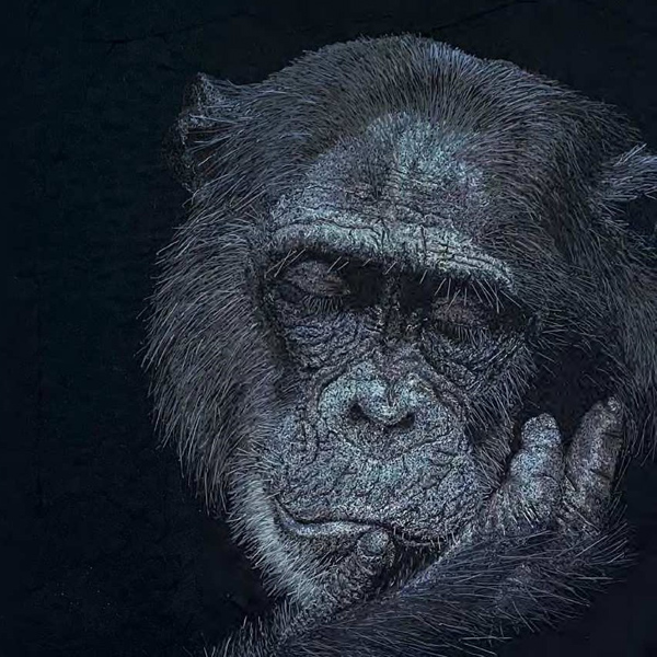 hyper-realistic chimpanzee portrait by Janine Heschl