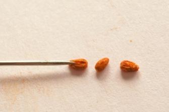 Sugared almonds step 4