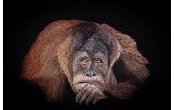 Orangutan hyperrealism embroidery portrait