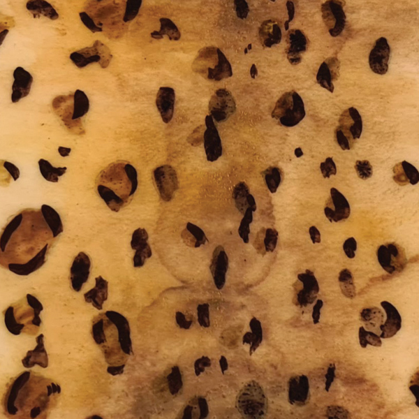 leopard print cake texture