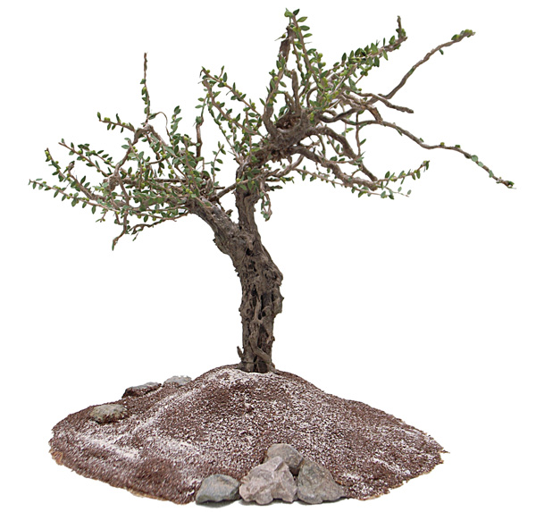 Olive tree by Angie Scarr. Polymer clay, Liquid clay and natural vegetable parts.