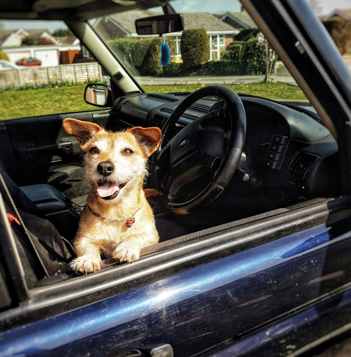 Happy dog and Land Rover Discovery