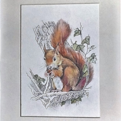 squirrel finished no border