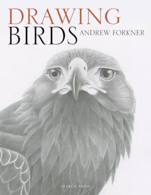 Drawing birds