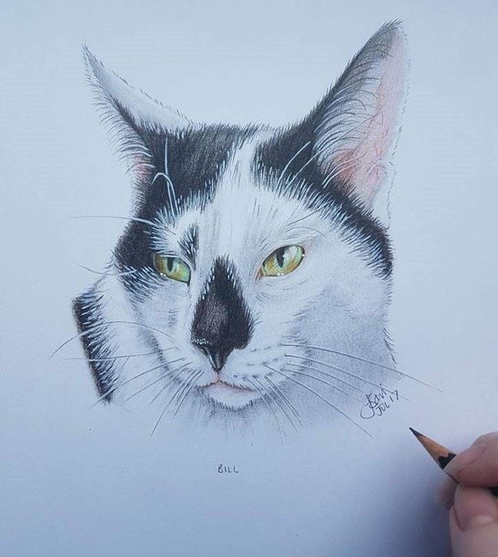 Bill the cat - pencil 2017
