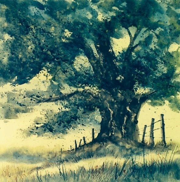 Evening sun, ancient tree and millions of midges
