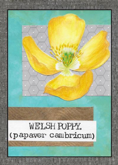 02. Poppy