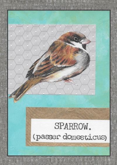 02. Sparrow