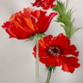 Where Poppies Grow My Thoughts Also Go.......