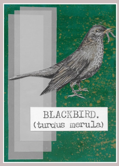 03. Blackbird