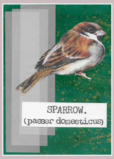 03. Sparrow