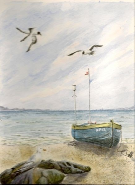 boat with gulls