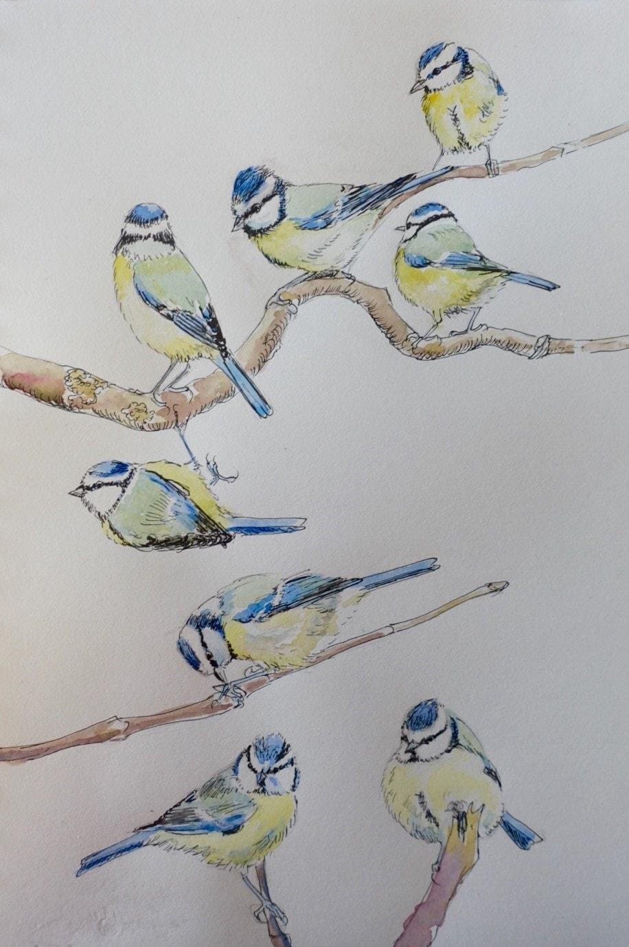 Blue tit sketches