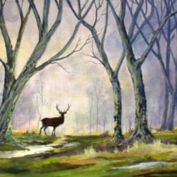 Woodland Visitor