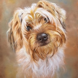 'Penny' Yorkshire Terrier - Oils