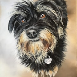 'Dingo', pastel pet portrait