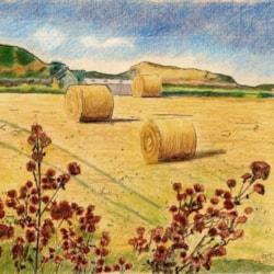 pembrokeshire field