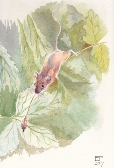Mouse pursuing poppy seed
