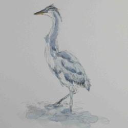 Day 29 - juvenile Heron