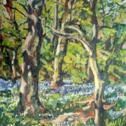 Spring in Oxsted Woods