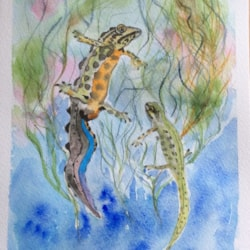 Mr and Mrs Newt
