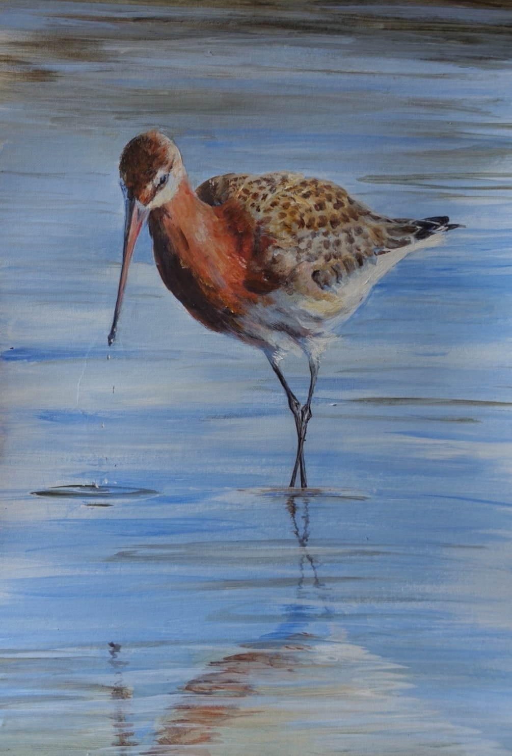 Black-tailed Godwit study in acrylic