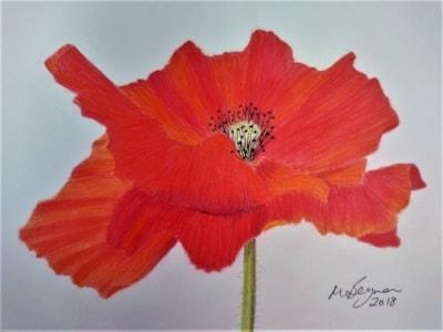 Bright Poppy